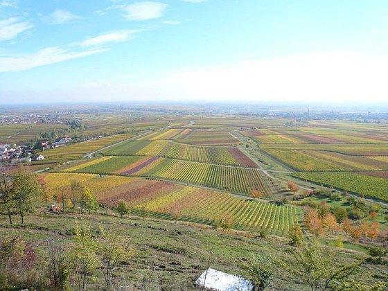 Sicht auf Rheinebene mit Weinbergen
