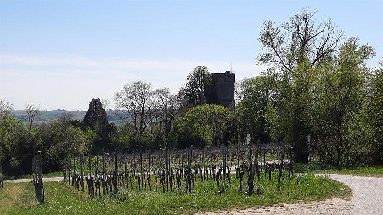 Pauliner Schloss2