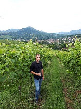 Weingut Hahn-Hof im Weinberg