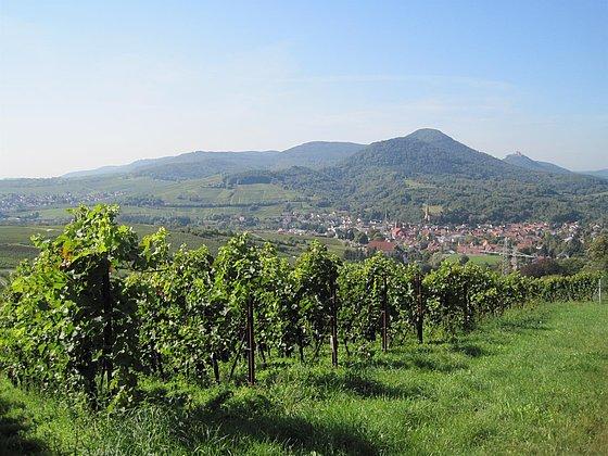 Albersweiler Weinberge